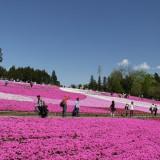 秩父の芝桜5