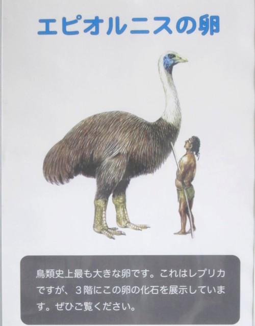 Bird museum14