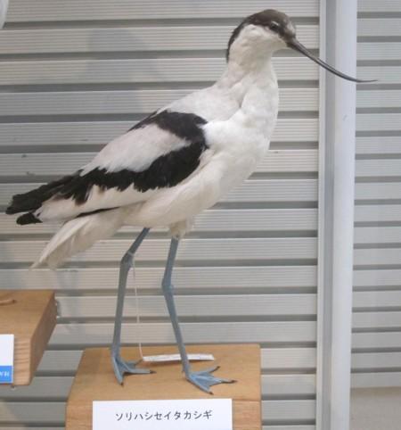 Bird museum47