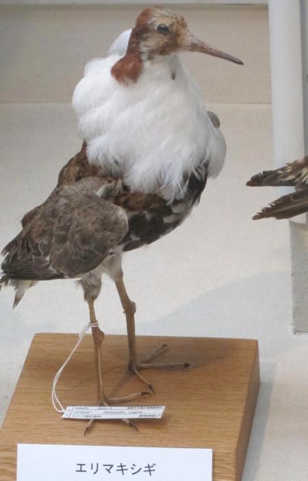 Bird museum44