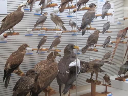 Bird museum40
