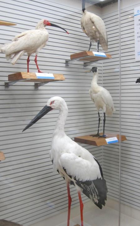 Bird museum34