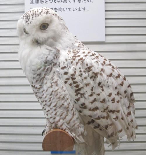 Bird museum52