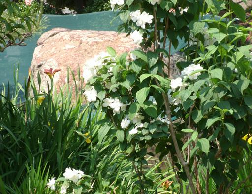 花の向こうの赤石