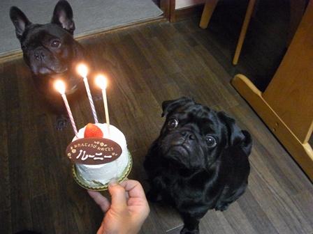 ルーニー誕生日