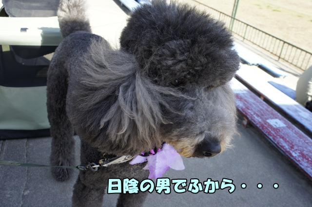 _DSC332120141111a.jpg