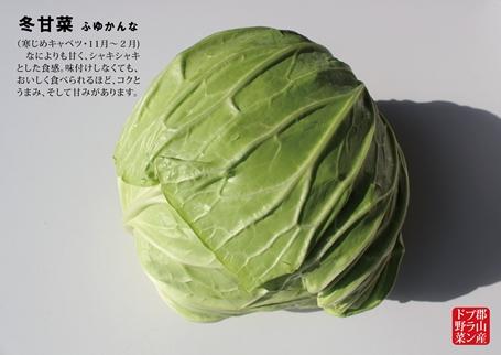 冬甘菜p_R