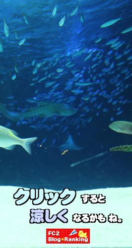 水族館バナー1C