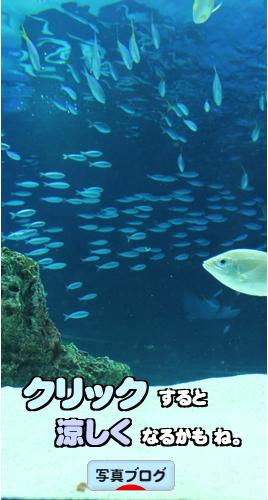 水族館バナー1B