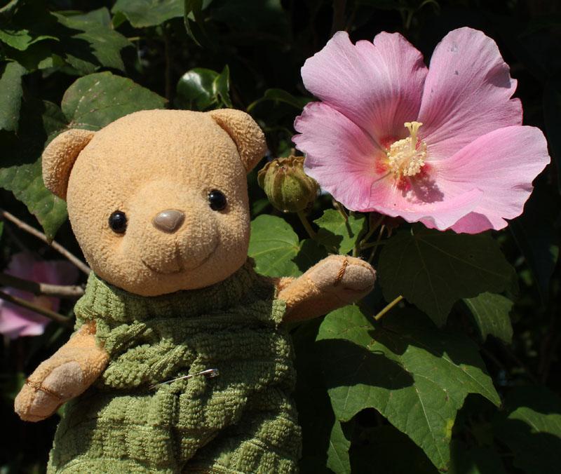 芙蓉の花と