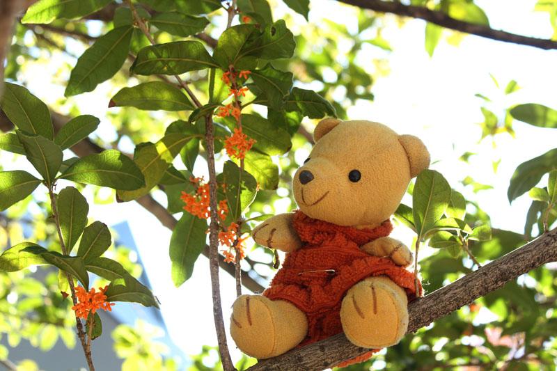 キンモクセイの花と 20121107