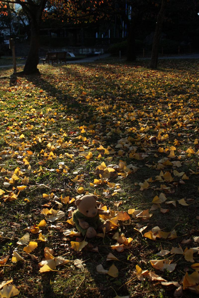 落ち葉を拾う