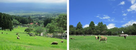 8-1-farm.jpg