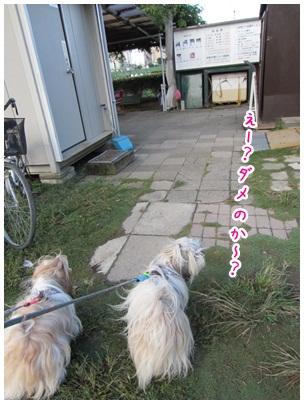 2012-10-08-04.jpg