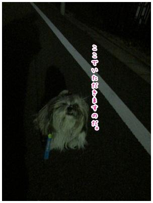 2012-11-20-03.jpg