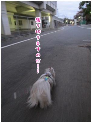 2012-11-20-06.jpg