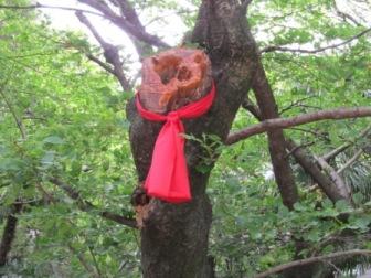 桜木に赤い布