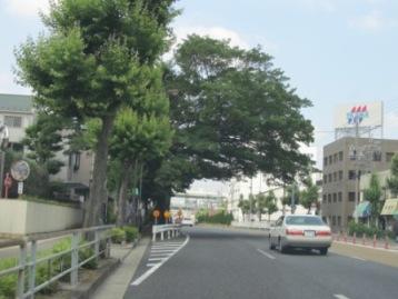 金城学園高校前の古木