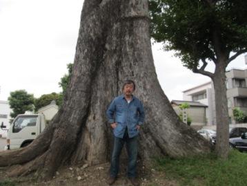 撞木町椋の木