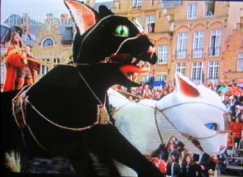ベルギー猫祭り