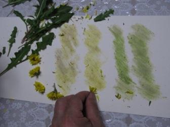 菊とタンポポ