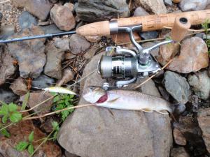 千曲川岩魚2