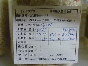 12久留米1-11管理カード