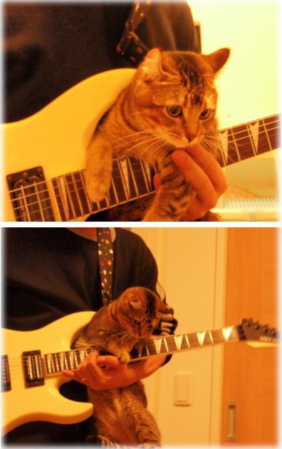 guitarneko1.jpg