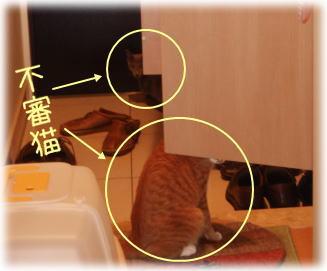 getabako1.jpg