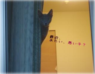 tamawaru.jpg