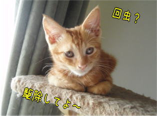 kaichu1.jpg