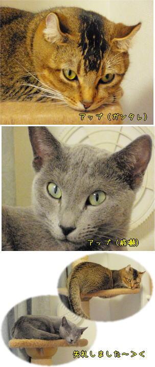 kimutama2.jpg