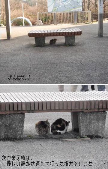 ashigara4.jpg