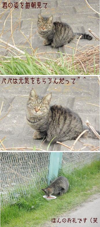 tamagawa15.jpg
