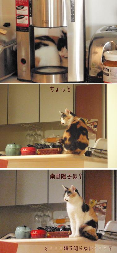 minaminoyoko.jpg