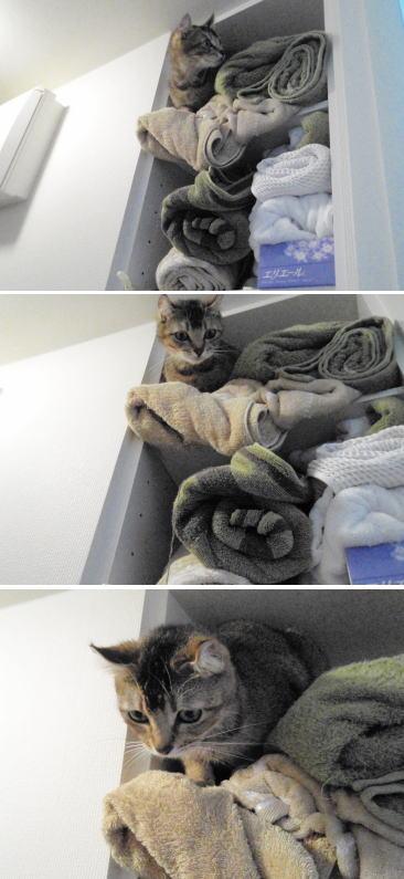 towel1.jpg