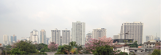 IMG_9412タイ桜500横細