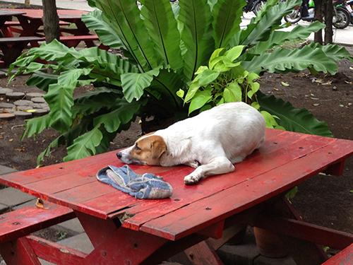 IMG_9743寮の前の犬500
