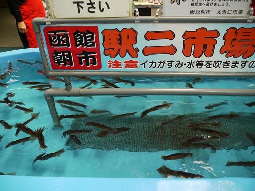 イカの釣り堀