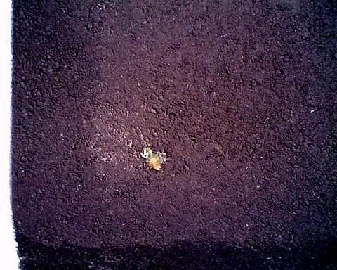 小さい蟷螂480
