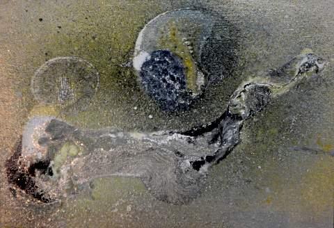 星の化石480