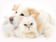 ペットの健康管理も大切に!
