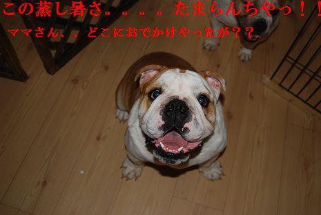 004_20120729182437.jpg