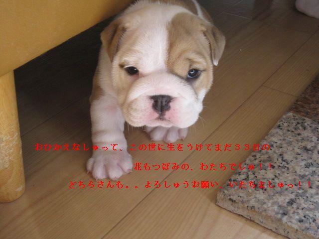 008_20120922155941.jpg