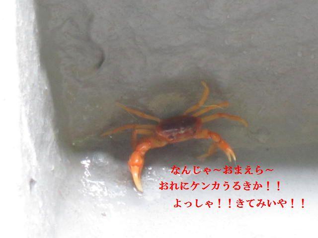 028_20120529144023.jpg