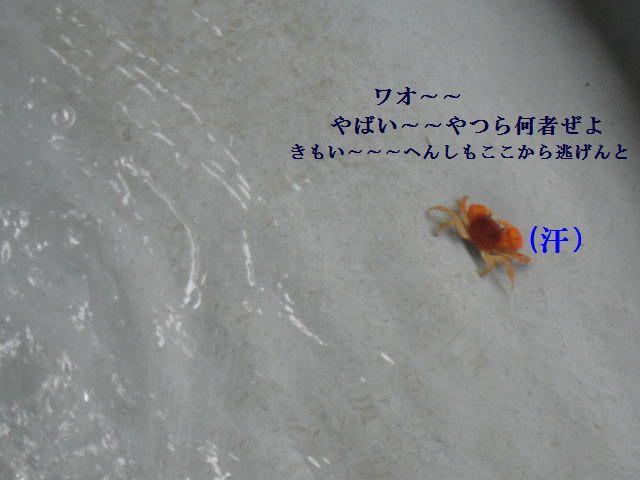 031_20120529144344.jpg