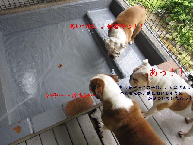 035_20120529143445.jpg