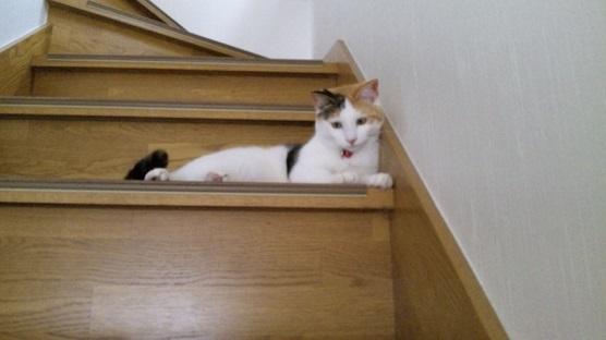 階段が好き