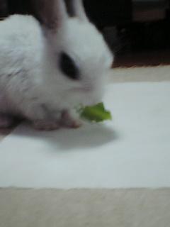 小松菜だぁいすき