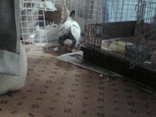 ペット用フロアーマット